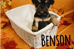 Picture of Benson