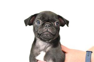 Picture of Milo