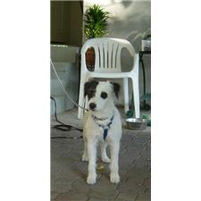 View full profile for Parson Jack Russell
