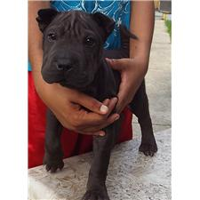 View full profile for Dewar Shar Pei
