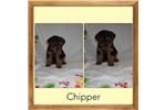Picture of Chipper