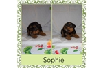 Picture of Sophine