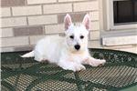 Picture of Wilbur