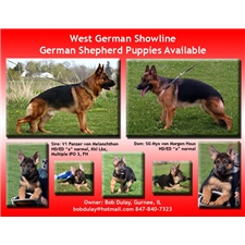 View full profile for Vom Haus Dulai German Shepherds