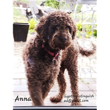 View full profile for Pvbh Lagotto Distinguished