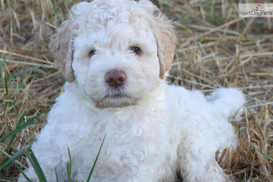 Dogs In Canada Breeders Directory