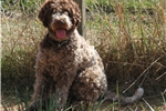 Picture of LAGOTTO- RESERVE FOR