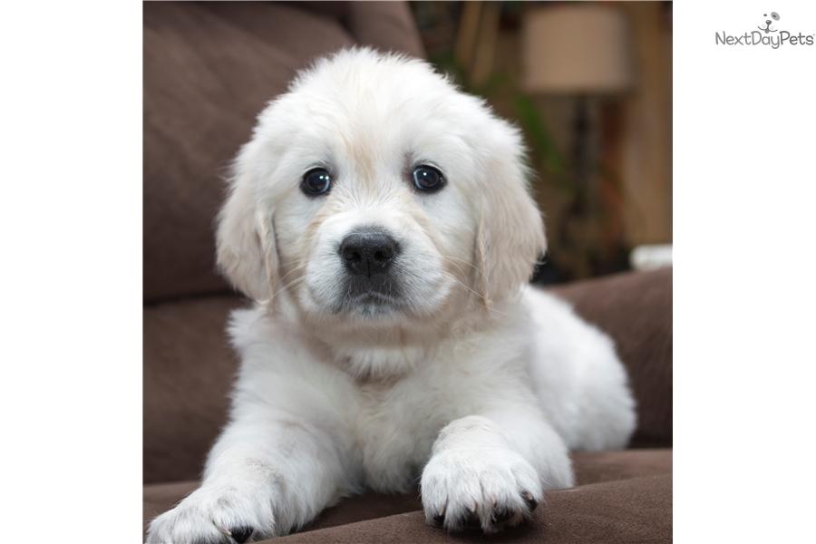 Puppies for sale in upper peninsula mi