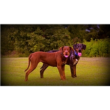 View full profile for Dawson Hollow Catahoulas