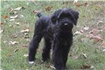 Picture of Female puppy born 6.24