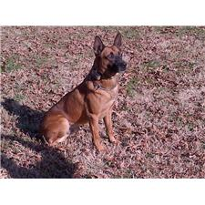 View full profile for Marvelous Malinois