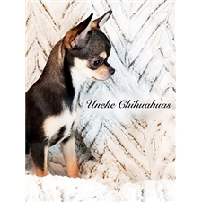 View full profile for Uneke Chihuahuas