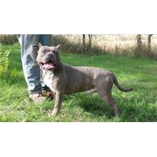 View full profile for Blue Wonders Bullys