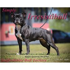 View full profile for Irresistibull Staffords