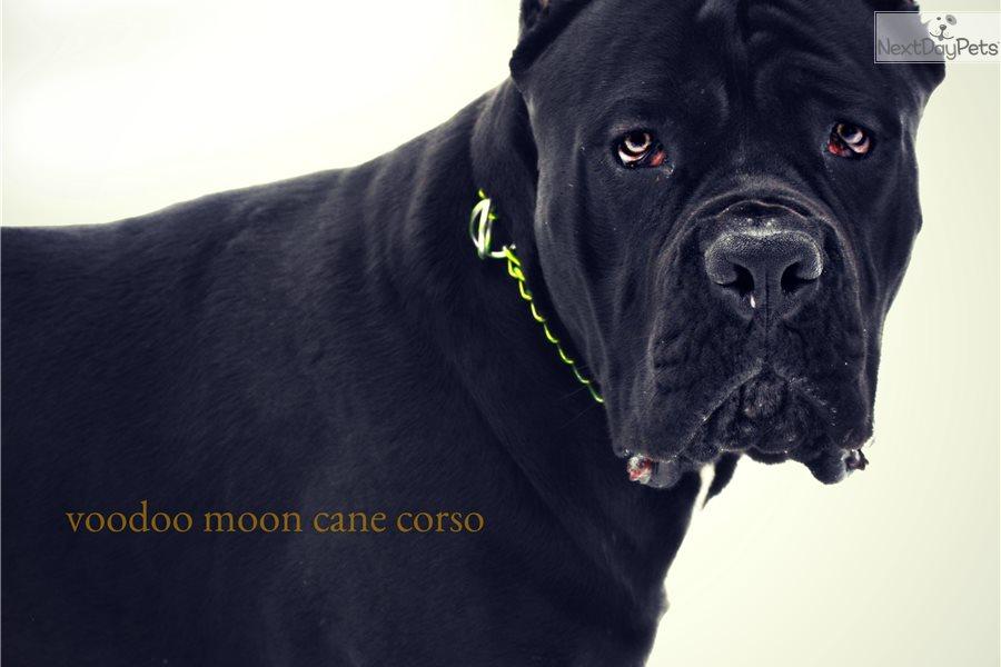 Spokane Dogs For Sale Adoption