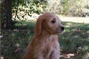 Picture of Stella