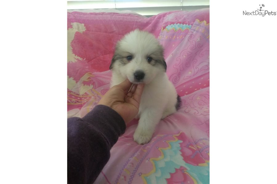 Great Pyrenees Dog Names Female