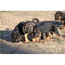 View full profile for Duck Creek Bloodhounds