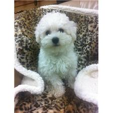 View full profile for Honey Pets Grooming Salon