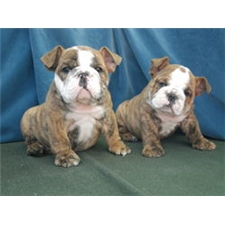 View full profile for Okbulliebabies
