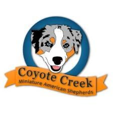 View full profile for Coyote Creek - Akc Miniature American Shephards