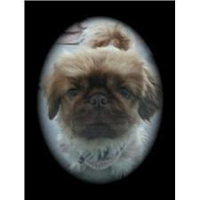 View full profile for Hobby Breeders Inc