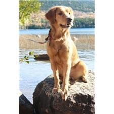 View full profile for Mountainside Goldens