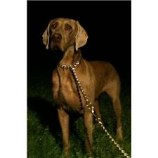 View full profile for Windy Nights Weims