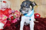 Picture of Chicago Jacarat Mix Type. Great for Kids. Boy