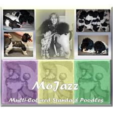 View full profile for Mojazz Poodles