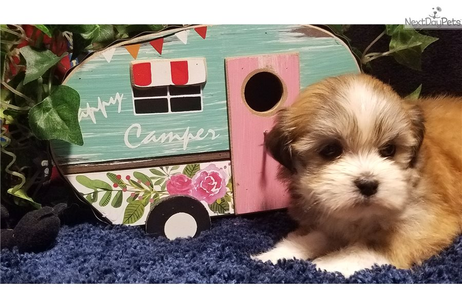 House Of Little Dogs Fayetteville