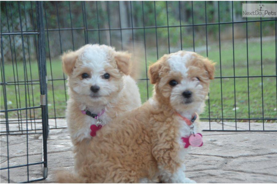 San Diego California Dog Breeders - Dog Breeder Directory