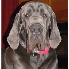 View full profile for Dfw Dynamic Danes