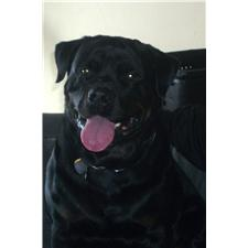 View full profile for Vom Reece Haus Rottweilers Inc