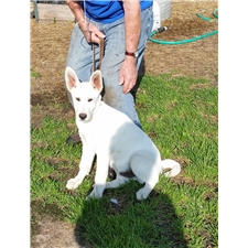 View full profile for Valleyhaven Kennels