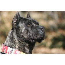View full profile for Socal Presa Canario