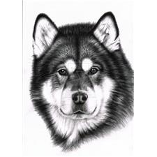 View full profile for Eastern Plains Alaskan Malamutes