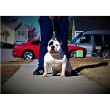 View full profile for Metro Bullies