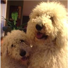 View full profile for Louisville Labradoodles