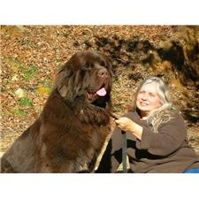 View full profile for Rockcastle Newfoundlands