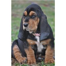 View full profile for Emerald Trail Bassets