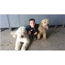 View full profile for Lawson Goldendoodles