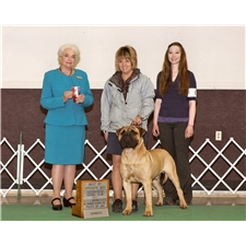 View full profile for Hamilton Top Dog Bullmastiffs