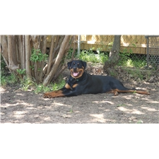 View full profile for Movalue Rotties