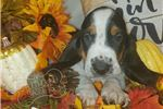 Picture of SAMMY HAGAR the rockin' puppy