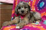 Picture of Mini Jezzabelle