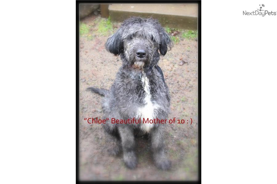 Splash Mixedother Puppy For Sale Near Portland Oregon