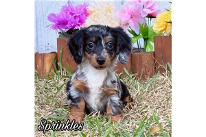Picture of Sprinkles