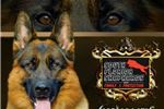 Picture of Champion Bloodline - AKC Ryker