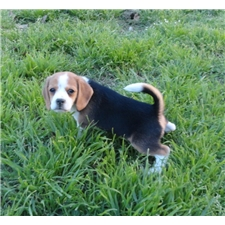 View full profile for Hottex Beagles